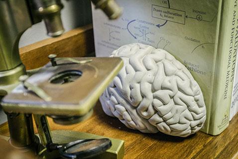 brain - books